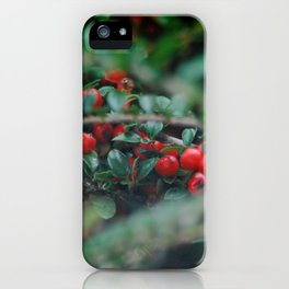 Cotoneaster Berries iPhone Case