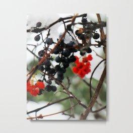 Winter Berries. Metal Print
