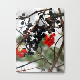 Winter Berries. Metal Print