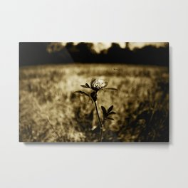 Flowers - Wildflower Monotone Metal Print