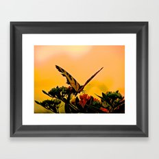 Butterfly Sunset Framed Art Print
