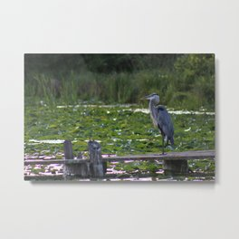 Heron on Deck Metal Print