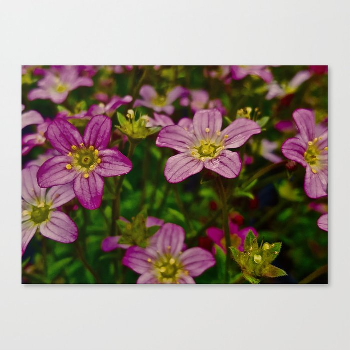 Sweet Little Pink Flowers Canvas Print