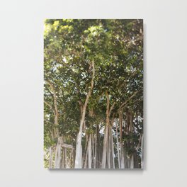 The Banyans of Sarasota Metal Print