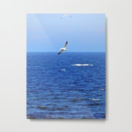 Northern Gannets in Flight Metal Print