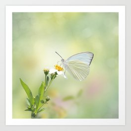 Great Southern White butterfly Art Print