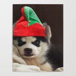 Husky Puppy Elf Poster