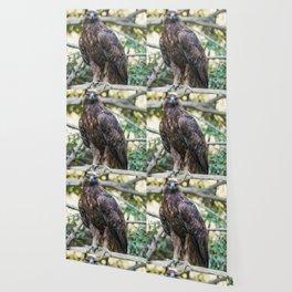 Golden eagle resting on a branch Wallpaper