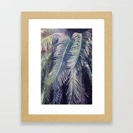 Sago Palm Framed Art Print