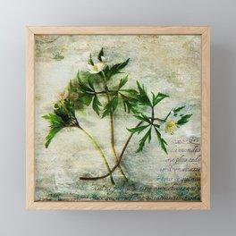 Anemone Poetry Framed Mini Art Print