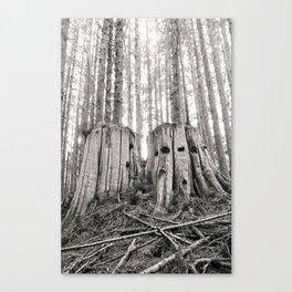 Nurse Stump Pacific Northwest Forest Cedar Trees Sepia Print Canvas Print