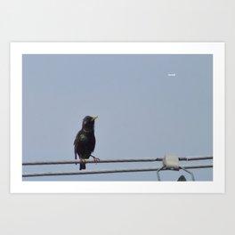 "Paboi ""Tweet!"" Art Print"