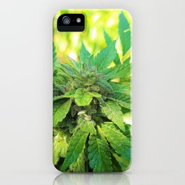 Jamaican Grown iPhone Case