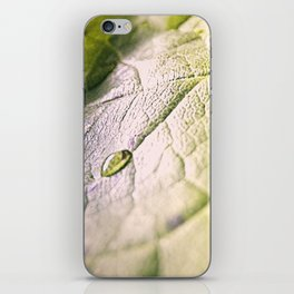 Water Drops On Rose Leaf iPhone Skin