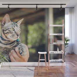 Cat by Artem Beliaikin Wall Mural