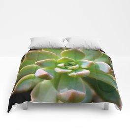 Succulent Comforters