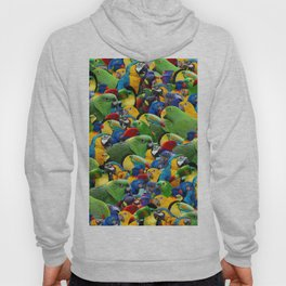 Parrots collage birds photo print parrots pattern green blue red yellow Hoody