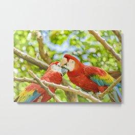 Ecuadorian Parrots Kissing at Zoo, Guayaquil, Ecuador Metal Print