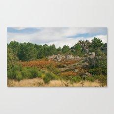Fallish Canvas Print