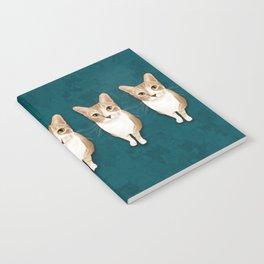 Iggy Notebook