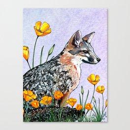 Channel Island Fox (Blue Sky) Canvas Print