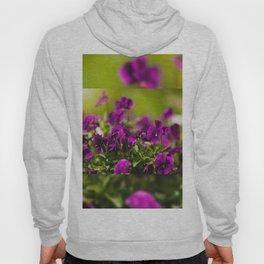 Purple pansies flowering bunch Hoody
