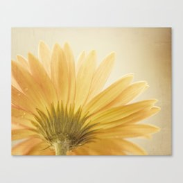 Gold Yellow Flower Photography, Golden Daisy Floral Photo, Nature Botanical Macro Picture Canvas Print