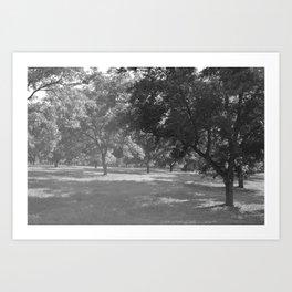 Pecan Orchard Art Print