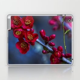 Red Flowering Quince Laptop & iPad Skin
