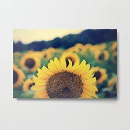 sunflower beauty no. 2 Metal Print