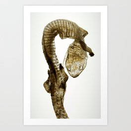 Shed Skin (lizard) Art Print