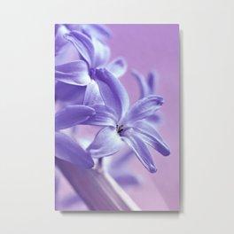 Hyacinth violet 064 Metal Print