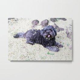 puppy blossom Metal Print