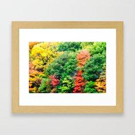 Colors of Fall Framed Art Print