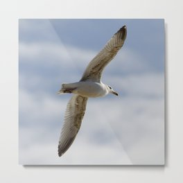 Young Gull Metal Print