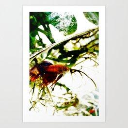 A Fish Named Earl Art Print