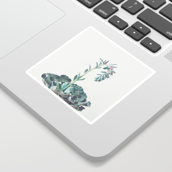 Flowering Succulent II Sticker