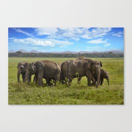 group of elephants Canvas Print