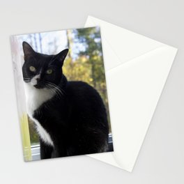 Tuxedo stare Stationery Cards