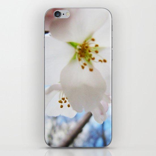 Cherry Blossom-1 iPhone & iPod Skin