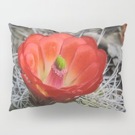 Red Blossom on a Hedgehog Cactus Pillow Sham