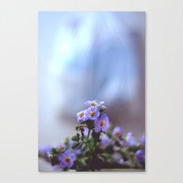 Little blue flowers Canvas Print