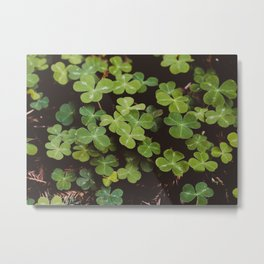 Redwood Sorrel - Nature Photography Metal Print