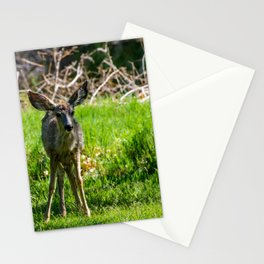 Fawn - Capitol Reef National Park - Utah Stationery Cards