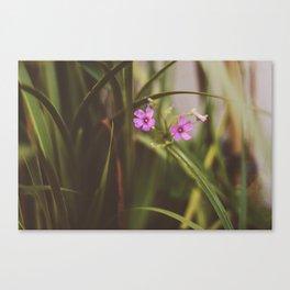 trebol flowers Canvas Print