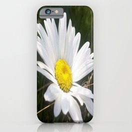 Close Up of a Margarite Daisy Flower iPhone Case