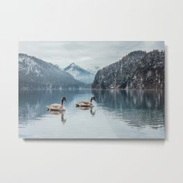 Couple of swans, Alpsee lake Metal Print