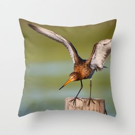 #black-tailed godwit #seldom #became #marsh meadow #breeder Throw Pillow