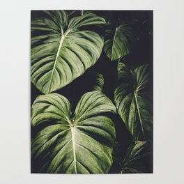 Monstera Madness Poster