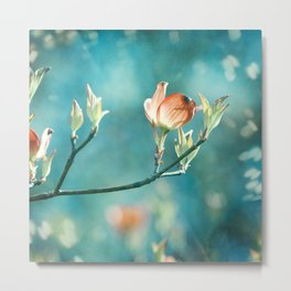 Teal Orange Floral Photography, Turquoise Dogwood Flower Art, Aqua Coral Nature Metal Print
